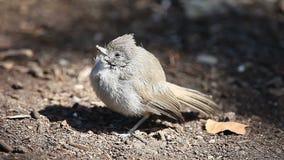 Sick young bird