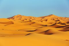 Sickle-shaped sand dunes in the light of the setting sun