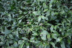 Sickly bushes Royalty Free Stock Photo