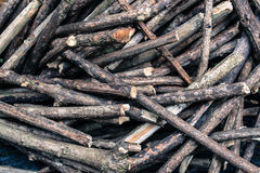 Sicks and twigs, dry twigs,wood Stock Photos