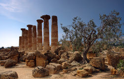 Sicyily olive tree and ancient architecture. Sicyily ruins from Roman architecture Royalty Free Stock Photo