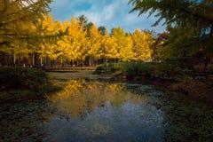Sidaändringsfärgen under hösten Nami Island Royaltyfria Foton