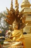 Sida av att sitta thailändsk Buddha med Nagastatyn som bär guld- cl Arkivfoton