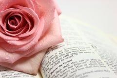 Sida av en öppen bibelsida royaltyfri fotografi