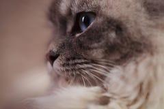 Sida av huvudet av en katt arkivfoto