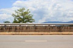 Sida av vägen med trädet royaltyfri foto