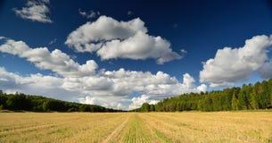 Sida för land för vetefält Arkivbilder