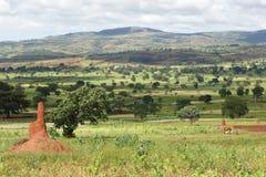 Sidama, Ethiopia, Africa. Landscape close to Yabelo, Ethiopia, Africa Stock Images