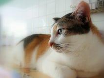 Sidan beskådar av katt Royaltyfri Foto