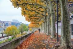 Sidan går av floden saone i höstsäsongen, Lyon den gamla staden, Frankrike Arkivbild