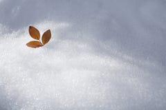 Sidanedgång på snö Fotografering för Bildbyråer