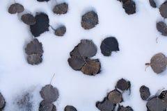 Sidanedgång på snö Arkivfoton