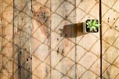 Sidasolljus Fotografering för Bildbyråer