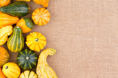 Side border of ornamental autumn gourds Stock Image