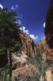 Side canyon in Zion National Park, Utah Stock Photography