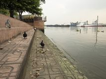 Side of Chaophaya river. Bird walk on side of Chaophaya river in Bangkok on cloudy day Stock Photos