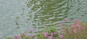 RIPPLES ON WATER AND FLOWERS ON SHORE OF DAM. Side of dam with flowering vegetaion next to rippled water stock photography