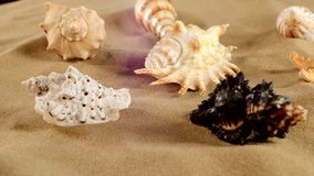 Side of different sea shellsand starfish on beach stock video footage