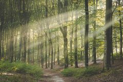 Side lit trail through Amerongse bos. Beautiful conditions on stunning morning walk royalty free stock images