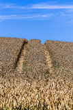 Side marks in a summer wheat field with blue sky Stock Photos