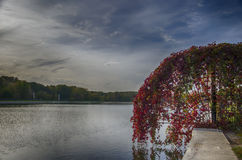 Side of the pond. The red plant on the shore of the pond Stock Photography