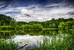 Side of the pond. Shore of the pond in a thicket of grass and trees Royalty Free Stock Image