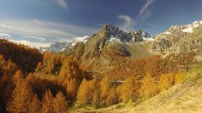 Side POV walking on fall path with woods trees, lake and snowy mounts.Sunny autumn day Hiking in colorful red forest. Wild nature mountain outdoors.Alps Devero stock video