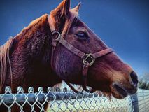 Side Profile Of A Beautiful Brown Horse Looking Over A Fence At Nightfall stock image