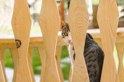 Side profile of cat. Attentive cat looking with one eye through wood beams Stock Photo
