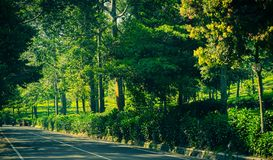 Side road asphalt with green tree and bush wall on side in puncak bogor. Indonesia royalty free stock photography