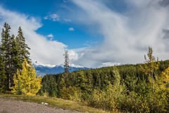 Side of the road among forests yellowed. Canadian Rockies. Beautiful autumn day. Side of the road among the mountains and forests yellowed Stock Photos