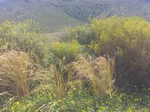 On the side of the road. Natural Western Cape vegetation Stock Photos
