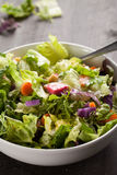 Side shot of italian salad with freshly harvested organic vegetables Royalty Free Stock Photography