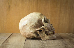 Side skull on wood background. Picture stock photos