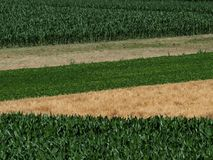 Top view of fields cultivated with different crops. Corn cob fields, wheat, beans and a freshly harvested one. Side top view of fields cultivated with different stock photos