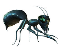 Side view of an ant. 3D Rendering Side view of an ant Stock Image