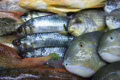 Assortment of fishes Stock Photography