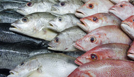 Assortment of fishes Stock Images