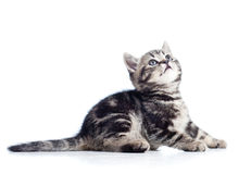 Side view of black cat kitten Royalty Free Stock Photography