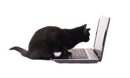 Side view of a black cat looking at a laptop screen Royalty Free Stock Photos