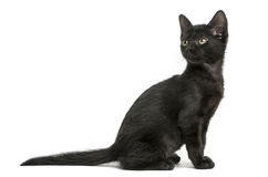 Side view of a Black kitten sitting, looking back, 2 months old Stock Photography