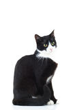 Side view of a black and white cat sitting Stock Images