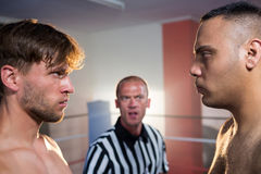 Side view of boxers staring at each other Royalty Free Stock Image
