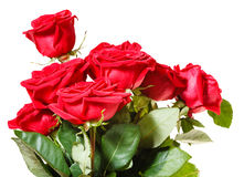 Side view of bunch of red roses isolated Stock Photos