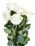 Side view of bunch of white roses isolated Royalty Free Stock Photography