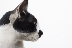 Side view of cat head on white Royalty Free Stock Photo