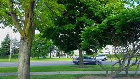 Side View of City Traffic Driving By Lush Green Trees.  Urban Landscape With Car Vehicles in Summer. In Day stock video footage