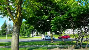 Side View of City Traffic Driving By Lush Green Trees.  Urban Landscape With Car Vehicles in Summer. In Day stock footage