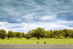 Side View on Countryside Road. With Dark Rainy Sky royalty free stock photography