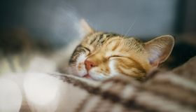 Cute beautiful cat sleeping inher dreams quilt. Side view of cute beautiful cat sleeping in her dreams on a classic British patterned quilt Royalty Free Stock Photography